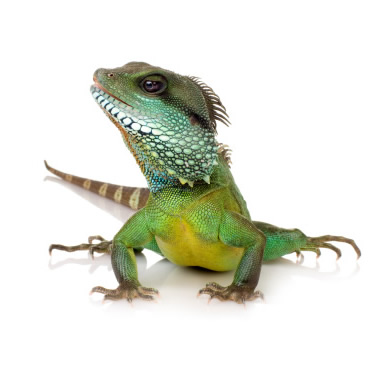 Walk The Walk care for your pets at home - including reptiles